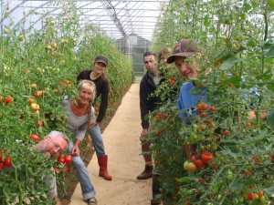 Pattison Farms staff in the greenhouse