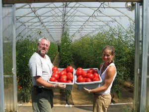 Fresh Tomatoes at Pattison Farms